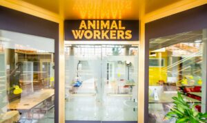 ANIMALWORKERS