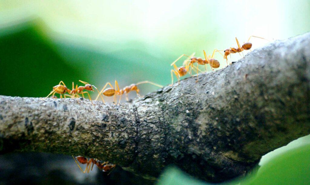 hormigas-trabajando-en-equipo