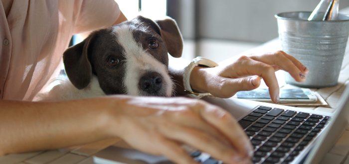 Hacer-home-office-con-tu-perro